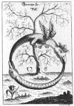 Σύμβολα - Μύθοι